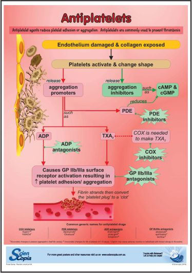 Antiplatelet medication poster